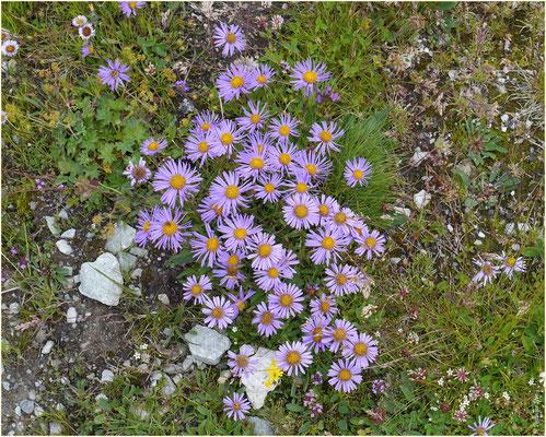 Blumen Susten-Illhorn 10.08.2014