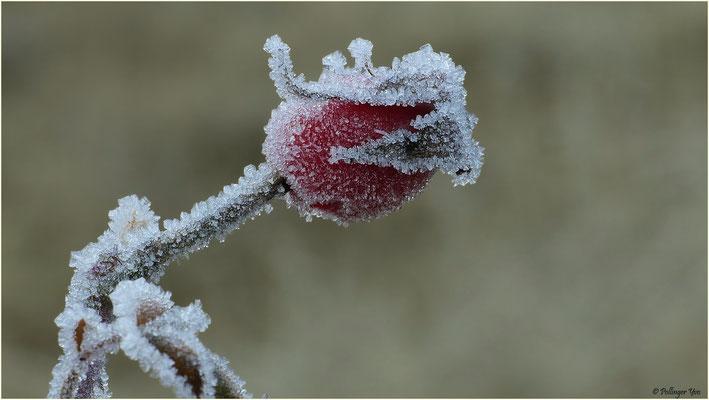 Winterimpressionen 20.12.2015