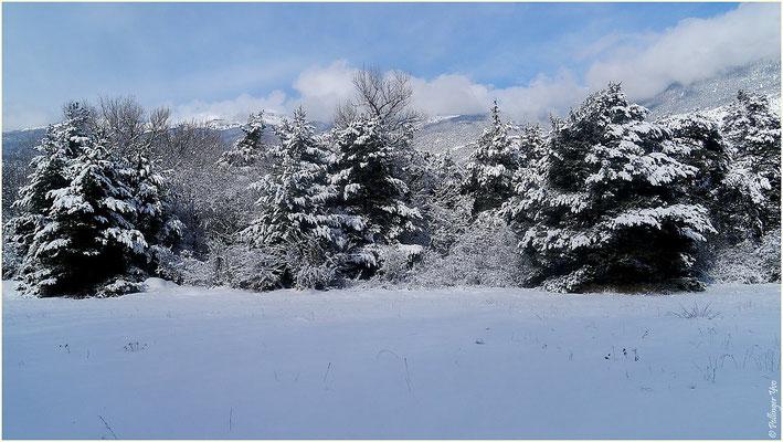 Winterimpressionen 31.01.2015