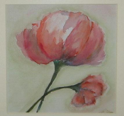 Amapola - Aquarell, 20 x 20 cm