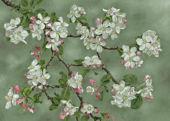 """Apfelblüte"" - Digital Painting, 40 x 28,5 cm"