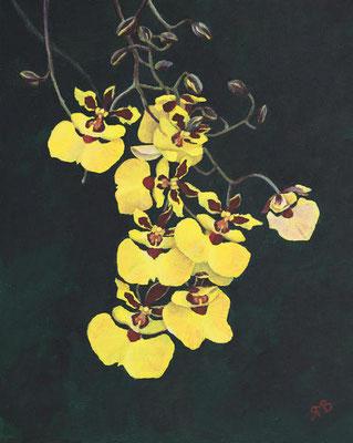 Tolumnia - Acryl auf Leinwand, 24 x 30 cm