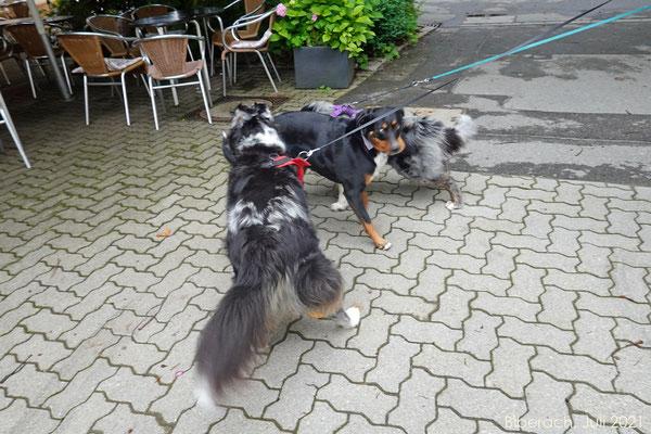 Begrüssung des fremden Hundes