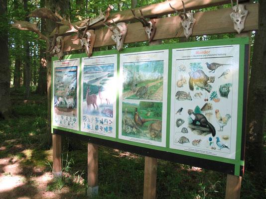 Infotafeln auf dem Lehrpfad Bothkamp: Tiere im Wald