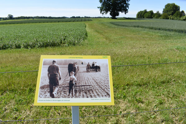 """Bildtafel """"Landwirtschaft früher""""; Einsaat von Rotklee in Winterroggen als Untersaat"""