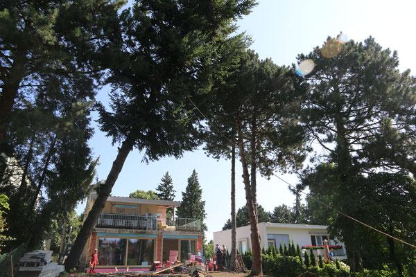 Baumfällungen Im Bezirk Mödling Gartengestaltung Und