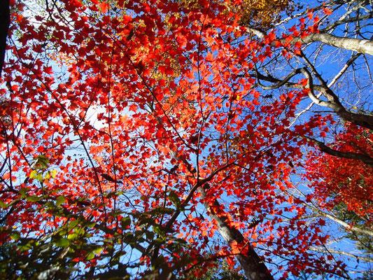 紅葉が見ごろでした。
