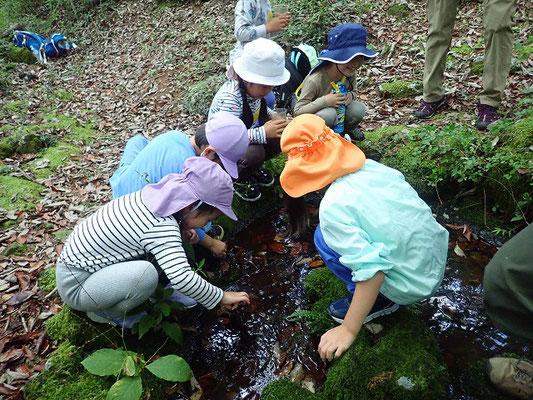 池の生物探し