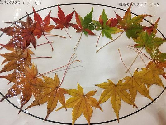葉のグラデーション