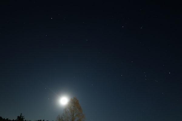 メタセコイアと月