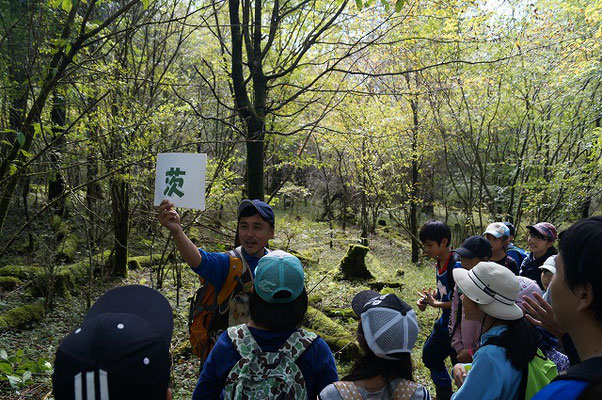森に関する漢字知識