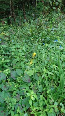 秋の草花 7