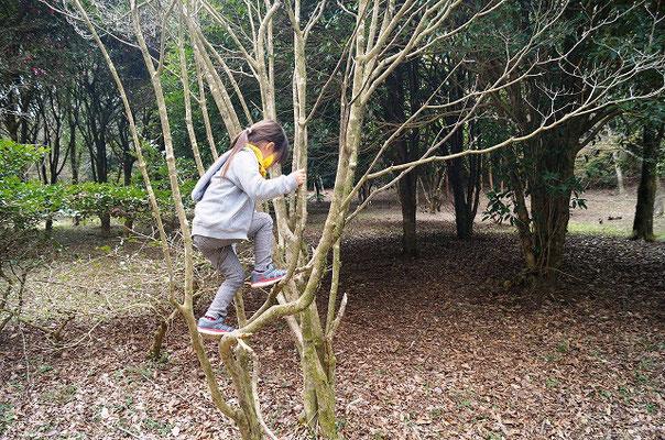 木登りに挑戦