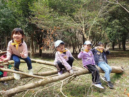 木登り娘たち
