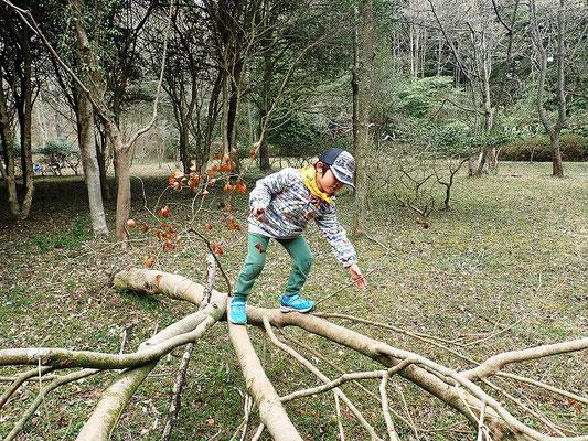 倒木木登り