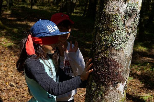 木を感じるプログラム