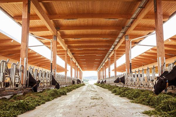Blick in einen der neuen Ställe, in denen sich die Tiere frei bewegen und die natürliche Witterung, aufgrund der offenen Bauweise, direkt miterleben können.