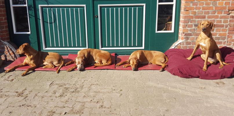 Unsere Mädels beim Sonnenbad: v. links - Zawadi, Chenaya, Zaina und Nandi
