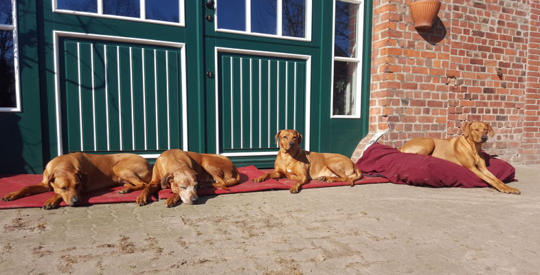 Unsere Mädels beim Sonnenbad: v. links - Zaina, Chenaya, Zawadi und Nandi