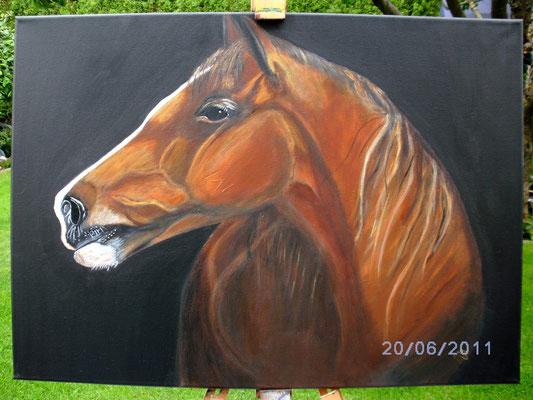 Pferd 60 x 80 cm