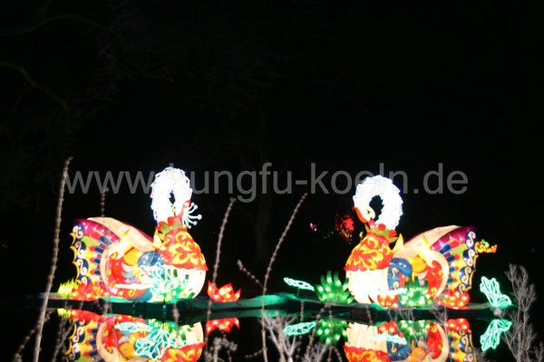 Schwäne beim China Licht Festival