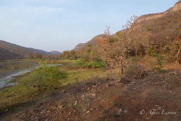 Paysage de Ranthambore