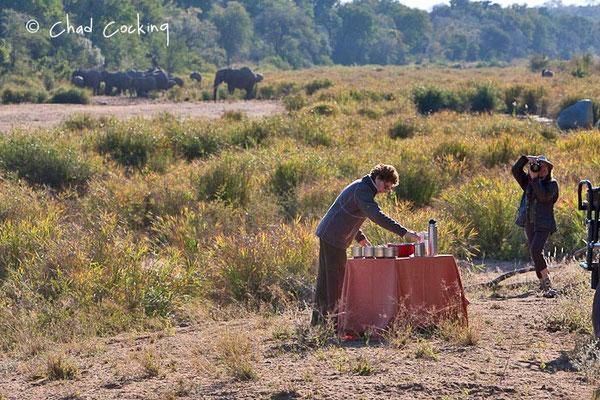 Coffee-breack ! Timbavati  - Afrique du Sud, juin 2011