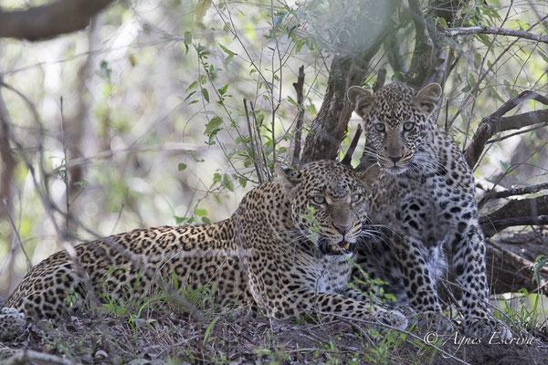 Mara - Kenya février 2017