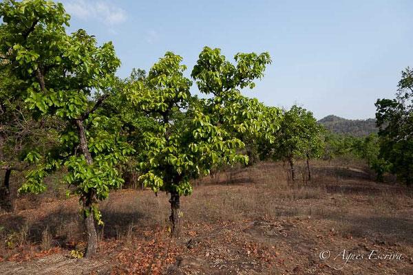 Paysage de Bandhavgarh