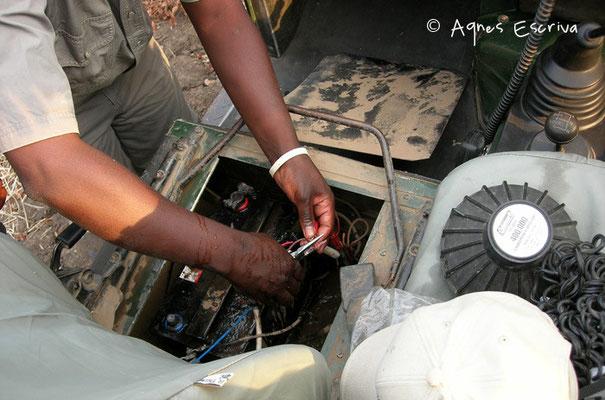 Problème de batterie à 50 mètres d'un troupeau d'éléphants... South Luangwa - Zambie nov 2005