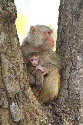 Mère et jeune 2