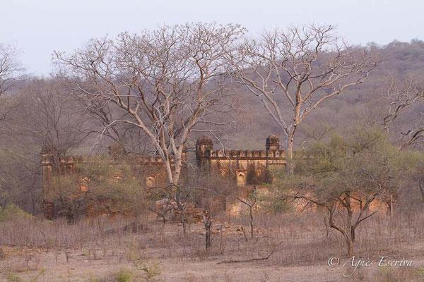 Palais, Ranthambore
