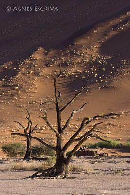 Ombre et lumière - 2ème prix Concours Afrique Terre de Couleurs et sélection finale Concours Canon 2009 à Namur - Namibie 2008