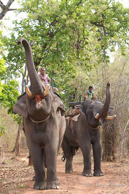 Eléphants et mahouts