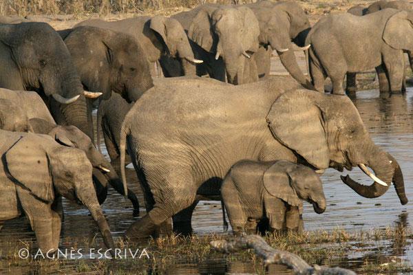 Reflets de lumière - Botswana 2007