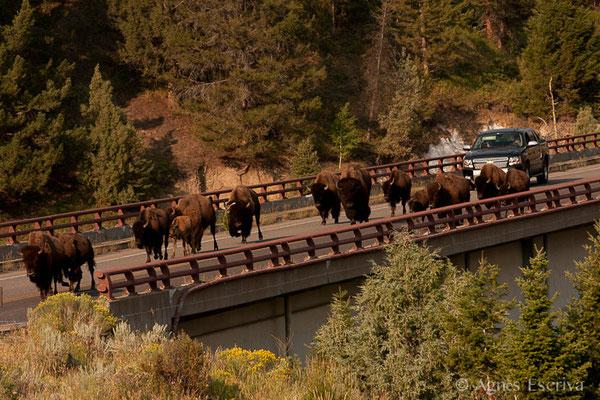 Yellowstone, Etats-Unis, Août 2013