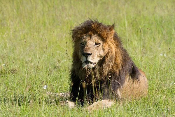 Mara - Kenya décembre 2015