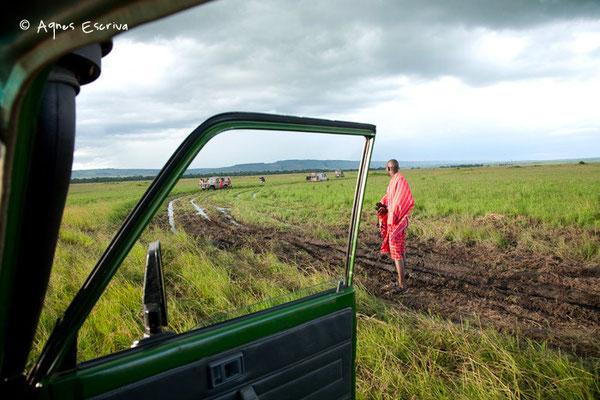 Embourbement, Masaï Mara, Kenya, décembre 2011