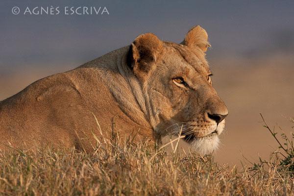 Petit matin chasseur - Kenya août 2010