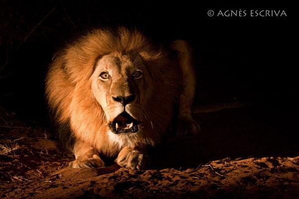 Un cri dans la nuit - Afrique du Sud novembre 2009