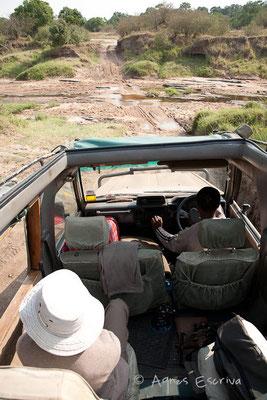 Traversée de la rivière Talek - Masaï Mara, Kenya - février 2011