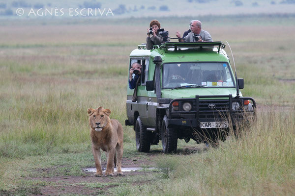 Masaï Mara, février 2007