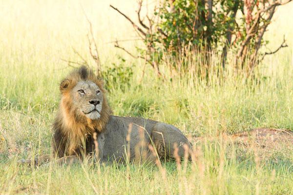 Afrique du Sud - février 2015
