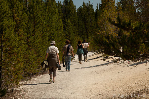 Balade à pied, Yellowstone, Etats-Unis, Août 2013