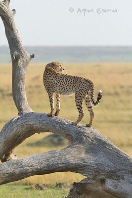Kenya - été 2011
