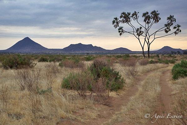 Samburu juillet 2012