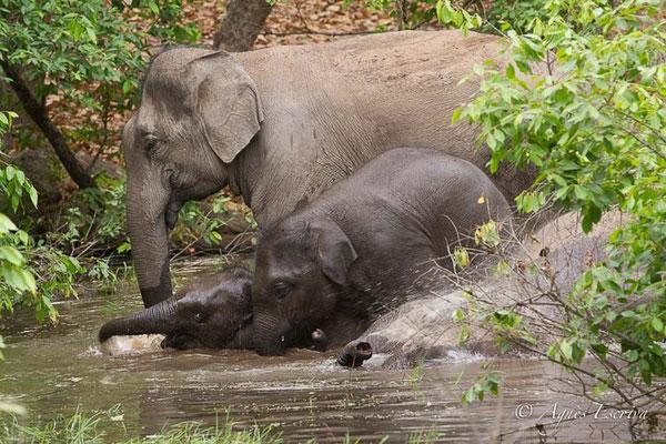 Le bain des éléphants 2