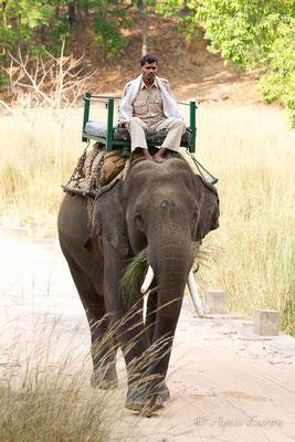 Eléphant et son mahout