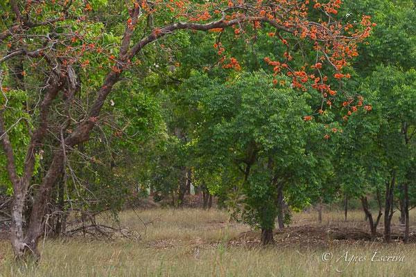 Jeune tigresse de Rajbehra