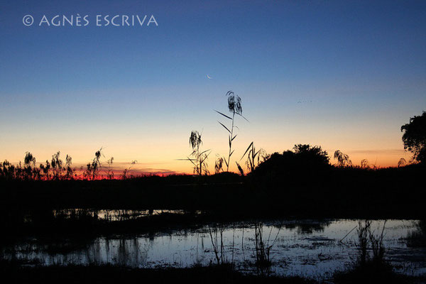 Marais au crépuscule - Zambie mai 2006